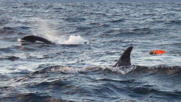 avonturier en spreker Melvin Redeker vlog orkas en haring
