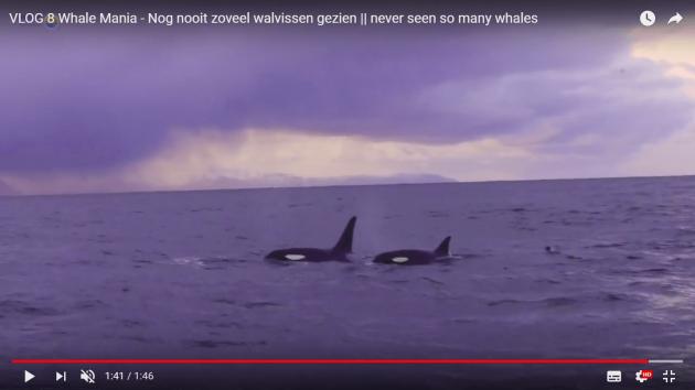 avonturier en spreker Melvin Redeker vlog whalemania.jpg