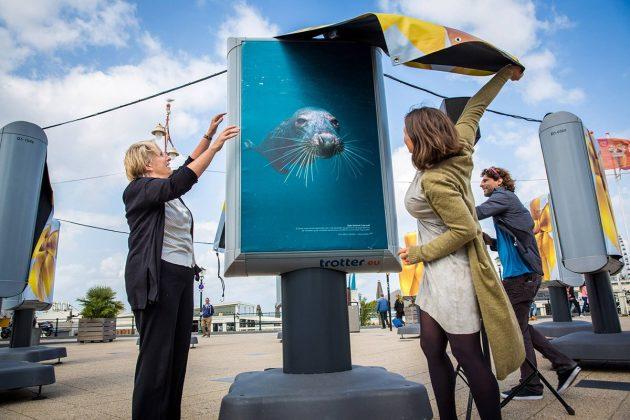 Melvin Redeker's zeehondfoto is het gezicht van de expositie op de boulevard van Scheveningen